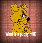 Welcome, here is where you can learn more about puppie mills.
